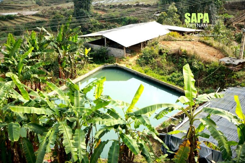 Sapa_045