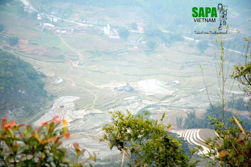 Sapa_046
