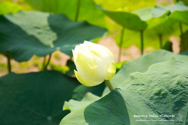 Mekong_025