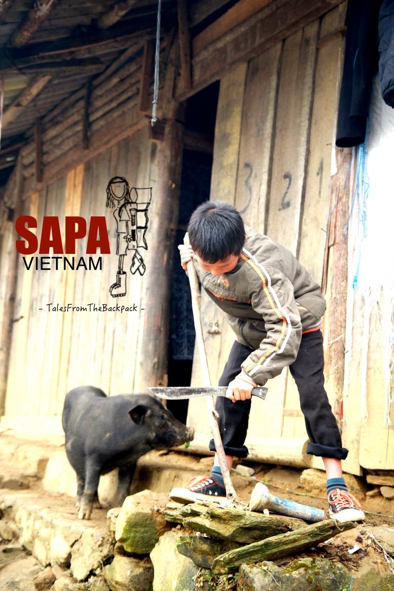 Sapa_120