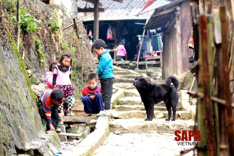 Sapa_139