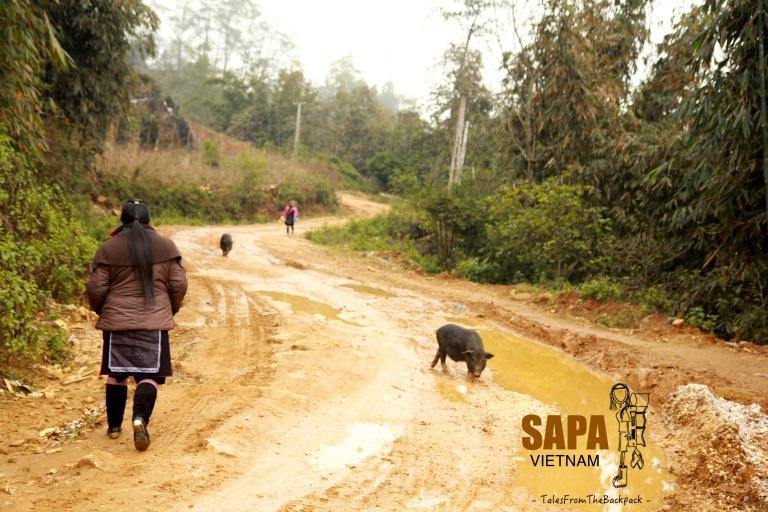 Sapa_315