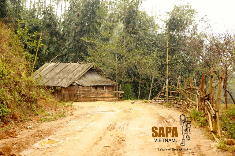 Sapa_317